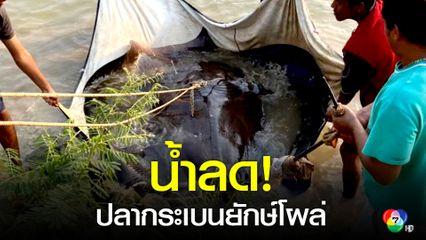 ชาวบ้านตกเบ็ดหาปลาในแม่น้ำเจ้าพระยา ได้ปลากระเบนยักษ์หนักกว่า 300 โล