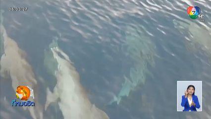 สุดเริงร่า! ฝูงโลมาปากขวดกว่า 50 ตัว แหวกว่ายน้ำอวดโฉมกลางทะเล จ.พังงา