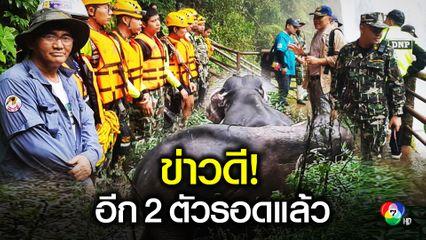เช้านี้ช้างป่าอีก 2 ตัวเดินกลับขึ้นป่าได้แล้ว