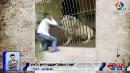 ภาพเป็นข่าว : สิงโตกัดแขนผู้ดูแลผ่านลูกกรง ขณะกำลังโยนเนื้อดิบให้อาหาร
