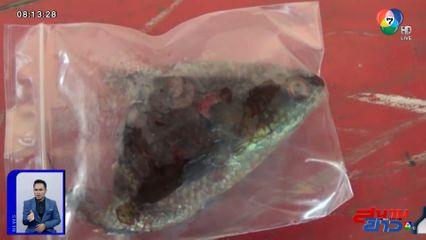 ภาพเป็นข่าว : อุทาหรณ์! หนุ่มใช้ปากคาบปลา เกิดไหลเข้าไปติดคอ เสียชีวิต
