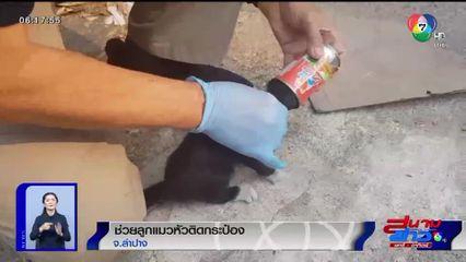 ภาพเป็นข่าว : ช่วยลูกแมว หัวติดกระป๋อง