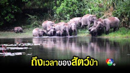 ปิดอุทยานแห่งชาติเขาใหญ่ สัตว์ป่าออกหากินมากขึ้น