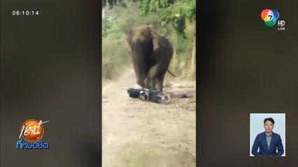 คลิประทึก เจ้าโยโย่ ช้างป่าดงใหญ่ใช้งวงฟาด-กระทืบ จยย.ชาวบ้านพังยับ