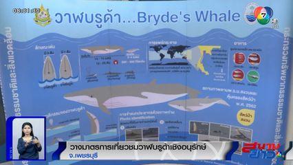 วางมาตรการเที่ยวชมวาฬบรูด้าเชิงอนุรักษ์ จ.เพชรบุรี