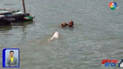 ภาพเป็นข่าว : น่ารัก! สุนัขแสนรู้ ช่วยเจ้าของจมน้ำ จ.สุราษฎร์ธานี