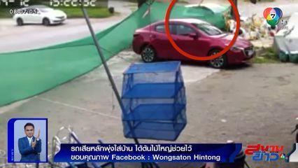 ภาพเป็นข่าว : รถยนต์เสียหลักพุ่งใส่บ้าน ได้ต้นไม้ใหญ่ช่วยขวางไว้