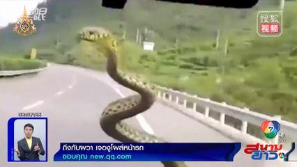 ภาพเป็นข่าว : ถึงกับผวา! ขับรถอยู่ดีๆ เจองูตัวยักษ์โผล่ทักทายหน้ารถ