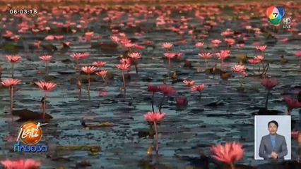 นักท่องเที่ยวคึกคัก แห่ชมทะเลบัวแดง บึงหนองหานกุมภวาปี จ.อุดรธานี