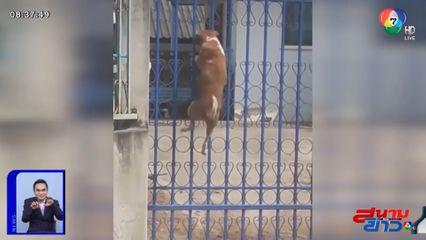 ภาพเป็นข่าว : เหนือชั้น! เจ้าตูบหนีเที่ยว โชว์สกิลปีนรั้วเข้าบ้านขั้นเทพ