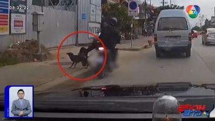 ภาพเป็นข่าว : จวกเละ คนขี่ จยย.เตะสุนัขริมถนน สนองความสนุกตัวเอง