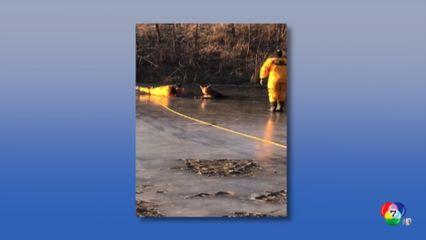 จนท.ช่วยสุนัขตกบ่อน้ำแข็ง-ตกน้ำ ในสหรัฐฯ